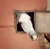 Horse in the stable — Stock Photo