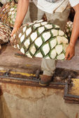 Agave tequila production — Stock Photo