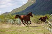 Kurlar at koştu — Stok fotoğraf