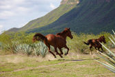 Lopend paard — Stockfoto