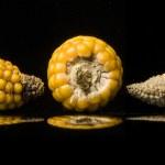 Corn, cob, yellow, ripe, copy space, food, black — Stock Photo #46599899
