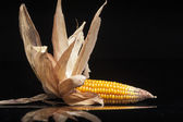 Corn, cob, yellow, decoration, still life, elegance — Stock Photo