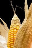 Corn, macro, yellow, ripe, appetizing, food, healthy eating — Stock Photo