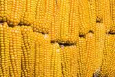 トウモロコシ、cob、複数の黄色、熟した、穀物、食品 — ストック写真