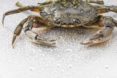 Crab, crustacean, open claws, seafood, food, one animal, studio — Stock Photo