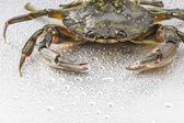 Crab, crustacean, open claws, seafood, food, one animal, studio — Stock Photo