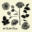 THE WILD ROSES - hand drawn illustrations B&W — Stock Vector #45146211