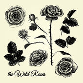 THE WILD ROSES - hand drawn illustrations B&W — Stock Vector