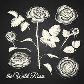THE WILD ROSES - hand drawn illustrations - chalkboard — Stock Vector