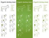 Organic Donkey meat parts — Stock Vector