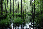 Flooded forest — Stock Photo