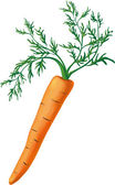 Carrot with greens — Stock Vector