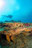 Barriere coralline del M — Foto Stock