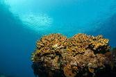 Barriere coralline del m — Fotografia Stock