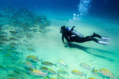People diving in the caribbean sea — Stock Photo