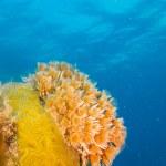 Постер, плакат: Coral reef scenics