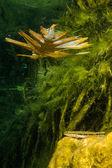 Cenotes from yucatan peninsula — Stock Photo