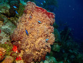 Coral reef from the caribbean. — Stock Photo