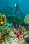 Invasive lionfish — Stock Photo