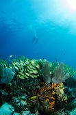 Coral reef scenics — Stock Photo