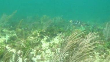 Loggerhead Turtle. — Stock Video