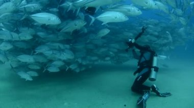 Divers with large school of fish — Stock Video