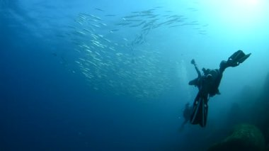 Divers underwater — Stock Video