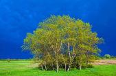 Green grove — Stock Photo
