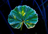 Hoarfrost on green leaf — Stock Photo