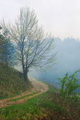 Path in forest with dramatic atmosphere — Stock Photo