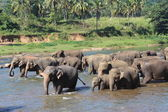 Elephants go on the watering place — Foto Stock