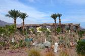 Succulent garden on site in Egypt — Stock fotografie