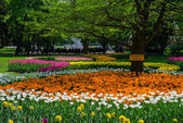 Blooming tulips in the park — Stock Photo