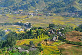Terrace rice field and mountain view, Sapa, Vietnam — Stock Photo