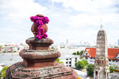 Lobe Amaranth or Bachelor Button on Wat Arun Temple — Stock Photo