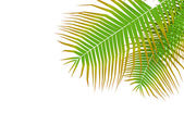 Palm leafy — Stock Photo