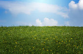 Spring sunlit meadow — Stock Photo