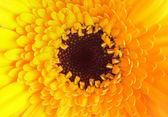 Närbild på enda gula dahlia — Stockfoto