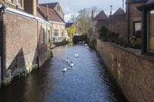 Swans on waterways, Bruges, Belgium — Stock Photo
