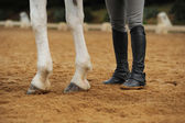 Horse legs and human legs  — Stock Photo