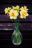Flowers Narcissus — Stock Photo