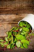 Salad mangold — Stock Photo