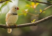 Lonely Bird — Stock Photo