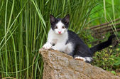 Gatito joven — Foto de Stock