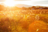 Golden evening on the meadow, rural summer backgrounds — Stock Photo