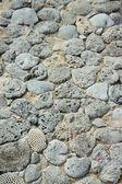 Patrón de piedra de los corales — Foto de Stock