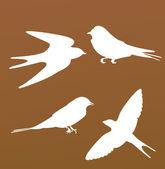 Birds silhouette — Stock Vector