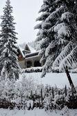 Landscape in winter — Stock Photo