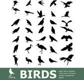 Set van vogels — Stockvector