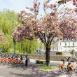 Постер, плакат: Cherry blossoms and bikes